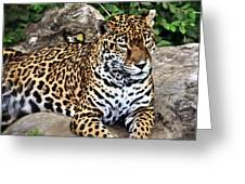 Leopard At Rest Greeting Card by Marty Koch