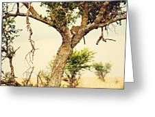 Leopard Eating His Victim On A Tree In Tanzania Greeting Card by Michal Bednarek