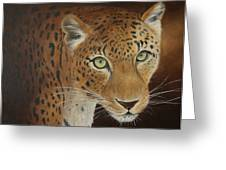 Leopard.. Out Of The Dark Greeting Card by Sid Ball