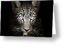 Leopard Portrait In The Dark Greeting Card by Johan Swanepoel