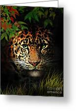 Leopard Greeting Card by Robert Foster
