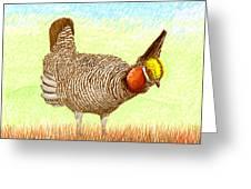 Lesser Prairie Chicken Greeting Card by Jack Pumphrey