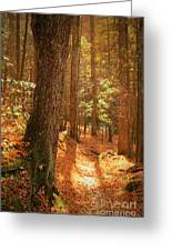 Let's Take A Walk Greeting Card by Geraldine DeBoer