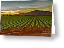 Lettuce Sunrise Greeting Card by Robert Bales