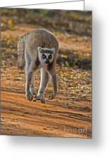 Levitation Greeting Card by Ashley Vincent