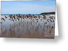 Lift Off Greeting Card by Bob Hislop