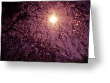Light And Cherry Blossoms Greeting Card by Vivienne Gucwa