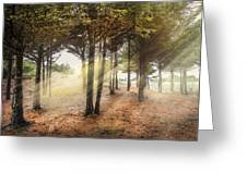 Light In The Dunes Greeting Card by Debra and Dave Vanderlaan