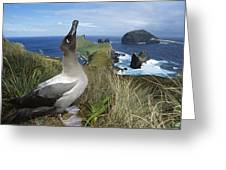 Light-mantled Albatross Sky-pointing Greeting Card by Tui De Roy