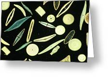 Light Micrograph Of Assorted Diatoms Greeting Card by Power And Syred