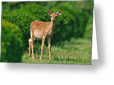 Lil' Bambi Greeting Card by Angel Cher