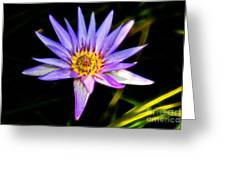 Lilac Lily Greeting Card by Mariola Bitner