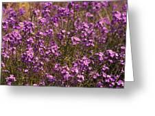 Lilac Greeting Card by Svetlana Sewell
