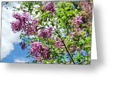 Lilacs And Clouds Greeting Card by Susan Savad