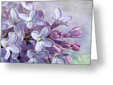 Lilacs Greeting Card by Cindi Ressler