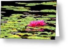 Lilies On Lake Hope Greeting Card by Dick Wood