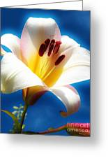 Lillie Love Greeting Card by Judy Via-Wolff