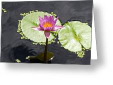 Lilly Lake Greeting Card by Carey Chen