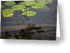 Lilly Pad Greeting Card by John McGraw