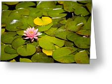 Lilly Pond Pink Greeting Card by Peter Tellone