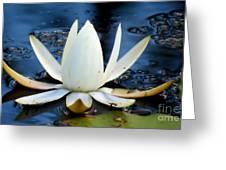 lilly  Greeting Card by Tonya Cribbs