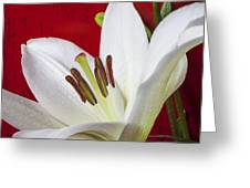 Lily against red wall Greeting Card by Garry Gay