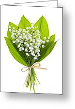 Lily-of-the-valley Bouquet Greeting Card by Elena Elisseeva
