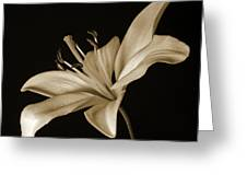 Lily Greeting Card by Sandy Keeton