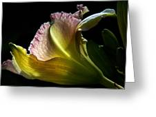 Lily Study I Greeting Card by Michael Friedman