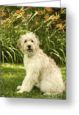Lily The Goldendoodle With Daylilies Greeting Card by Anna Lisa Yoder