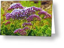 Limonium - Statice Greeting Card by Artist and Photographer Laura Wrede