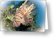 Lion Fish 2 Greeting Card by TN Fairey
