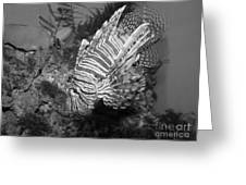 Lion Fish Black And White Greeting Card by TN Fairey