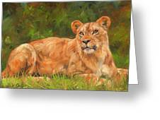 Lioness Greeting Card by David Stribbling