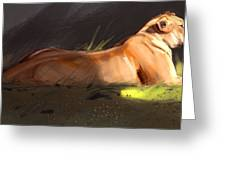 Lioness Sketch Greeting Card by Aaron Blaise
