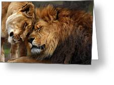 Lions In Love Greeting Card by Emmanuel Panagiotakis