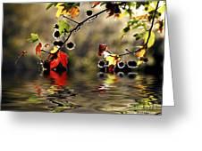 Liquidambar In Flood Greeting Card by Avalon Fine Art Photography