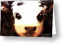 Little Black Baldy Greeting Card by Barbara Chichester