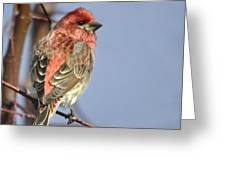Little Finch Greeting Card by Nava  Thompson