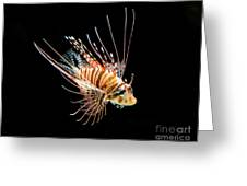 Little Lionfish Greeting Card by Jamie Pham