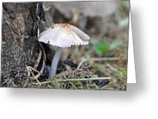 Little Mushroom Greeting Card by Bill Cannon