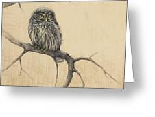 Little Owl Greeting Card by Lori  McNee