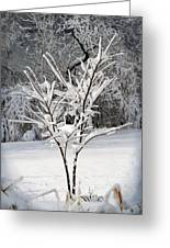 Little Snow Tree Greeting Card by Karen Adams