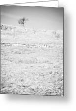 Little Tree On The Hill - Black And White Greeting Card by Natalie Kinnear