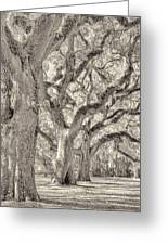 Live Oaks-1 Greeting Card by Bill LITTELL