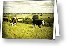 Livestock  Greeting Card by Les Cunliffe