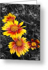 Living Color Greeting Card by Diane E Berry