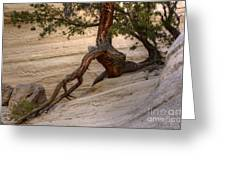 Living Gracefully Greeting Card by Bob Christopher