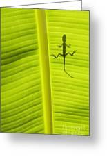 Lizard Leaf Greeting Card by Tim Gainey