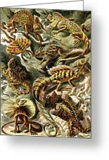 Lizards Lizards And More Lizards Greeting Card by Unknown